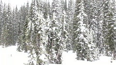 Snow on trees Stock Footage