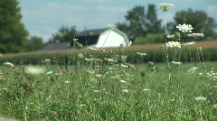Barn and Wildflowers - stock footage