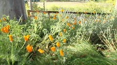Poppies Stables 5798 HD Stock Footage