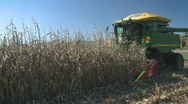 Corn harvester side on Stock Footage