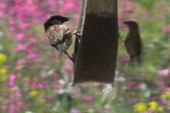 Bird Garden NTSC Stock Footage