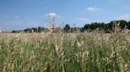 Green field in summer. Stock Footage