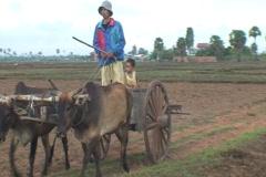 CAMBODIA-BULLOCK CART 2 Stock Footage