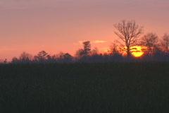 Georgia Sunrise Stock Footage