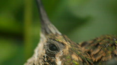 T195 extreme closeup of humming birds Stock Footage