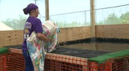 Stock Video Footage of Clean Pelican released after BP Gulf of Mexico oil spill_02