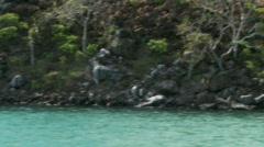 Galapagos Isabela Island shoreline Stock Footage