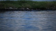 Stock Video Footage of Brown Pelicans nesting on oiled Pelican Island after Gulf BP oil spill_03