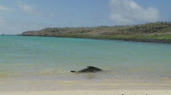 Galapagos Sea lion enjoys the water Stock Footage