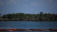 Stock Video Footage of Oiled booms protect Pelican Island from the BP Gulf oil spill_09