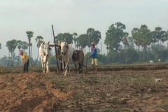 CAMBODIA-PLOUGHING FIELD 3 Stock Footage