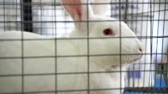 Caged Rabbit - stock footage