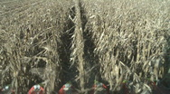 Corn harvester heads as viewed from cab Stock Footage