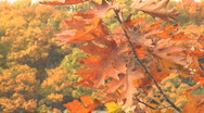 New england fall colors Stock Footage