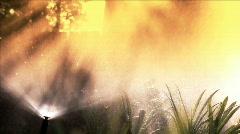 Sunshine in the sprinkler Stock Footage