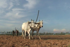 CAMBODIA-PLOUGHING FIELD 8 Stock Footage
