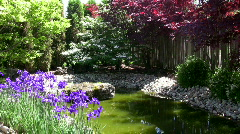 Colourful corner of Japanese Garden. Stock Footage