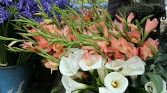 Haiti_flowers Stock Footage