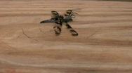 Stock Video Footage of ant