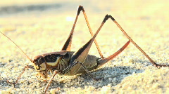 Grasshoppers at sea Stock Footage