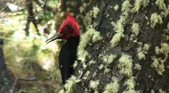Stock Video Footage of MF outdoor woodpecker002