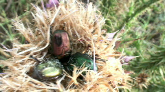 flower spike with cockroaches - stock footage
