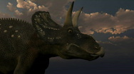 Stock Video Footage of Diceratops dinosaur, loopable