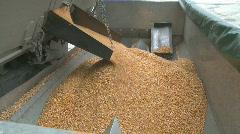 Corn flows into hopper wide shot Stock Footage