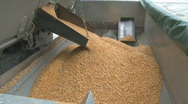 Corn flows into hopper wide shot Stock Footage