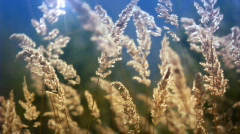 Dry grass in the wind Stock Footage