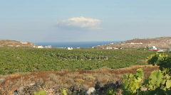 Vineyard In Santorini, Greece Stock Footage