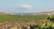 Stock Video Footage of Vineyard In Santorini, Greece
