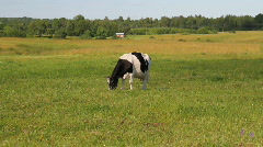 cow meadow - stock footage