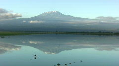 Reflection of kilimanjaro on a flood lake Stock Footage