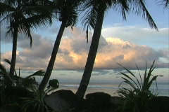 Rarotonga Palms and evening clouds Stock Footage