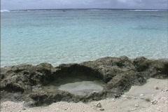 Rarotonga Tide pool in coral rock Stock Footage