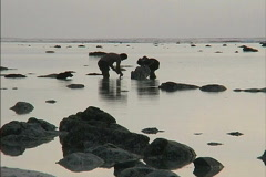 Rarotonga Man and boy collecting food Stock Footage