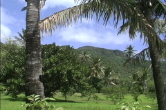 Rarotonga Island scene in the South Seas Stock Footage