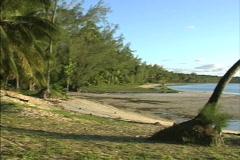 Aitutaki Palm frames water Stock Footage