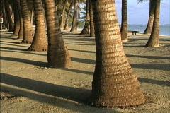 Aitutaki Palm trunks, sand and shadows Stock Footage