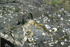 Yellow and grey lichens and green moss Stock Footage