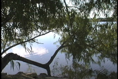 Willow tree reflected in a bayou Stock Footage
