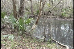 Bayou Coquille palmetto and trees by water Stock Footage