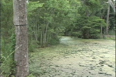 Bayou covered with green scum in Louisiana Stock Footage