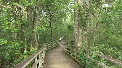 Florida board walk in swamp Stock Footage
