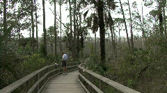 Florida boardwalk in swamp  Stock Footage