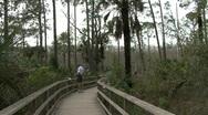 Florida boardwalk in swamp  Stock Footage