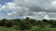 Florida Clouds over an orange grove Stock Footage
