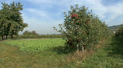 Germany Black Forest apple orchard Stock Footage