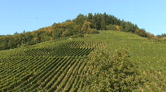Germany Black Forest vineyards on hill Stock Footage